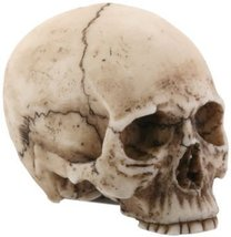 2.25 Inch Resin Realistically Painted Collectible Skull Head, Small - $8.99