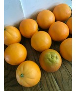 Artificial Fake Fruit Faux Oranges Realistic Theater Props Home Décor St... - $24.18