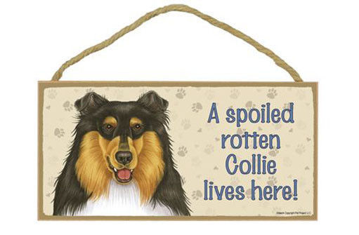 "Spoiled Rotten Collie Lives Here Sign Plaque Dog 10"" x 5"" Tri-Color pet gift"