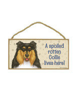 "Spoiled Rotten Collie Lives Here Sign Plaque Dog 10"" x 5"" Tri-Color pet ... - $10.95"