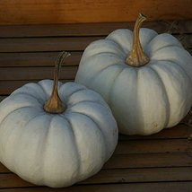 30 seed of Pumpkin Fruit Baby Boo - $16.71