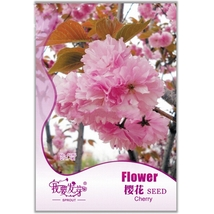 5 Seed Perennial Plant Japanese Cherry Trees Potted, DIY Beautiful Tree DO - $8.99