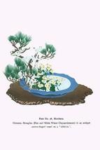 Oimatsu & Shiragiku (Pine and White Winter Chrysanthemum) in an Antique Mirror S - $19.99+