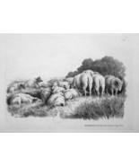 1801 ORIGINAL ETCHING Print by Howitt - SHEEP Herd Grazing Hiding in Hig... - $20.92