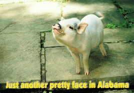 Just Another Pretty Face In Alabama Pig Garry Walter Printed Unused Post... - $14.50