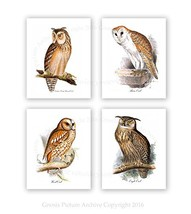 Gnosis Picture Archive Owl Decor Set of 4 Unframed Owl Prints Woodland A... - $49.18