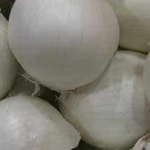SHIP FROM US SOUTHPORT WHITE GLOBE ONION SEEDS ~2 Oz PACKET SEEDS - NON-... - $74.00