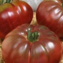 100/bag Climbing Tomato Bonsai Tomato Plants (23), HZ Healthy Vegetable ... - $8.89
