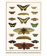 Butterflies, Garden acraeas, Caterpillars, Ornamented utetheisas, by Alb... - $19.99+