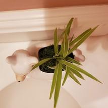 Llama Planter with live Spider Plant, ceramic animal planter pot, houseplant image 4