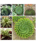 3 Seeds Spiral Aloe Aloe polyphylla - $2.57