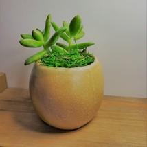 """Golden Sedum Succulent in Ceramic Owl Planter, Live Plant, 2.5"""" Animal Pot image 6"""