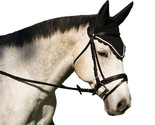 Equine Horse Fly Veil with Noise Reducing Ears - Black, Hunter Green, Royal Blue