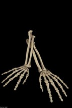 2pc SET-Human Anatomy Bones-SKELETON ARMS-Zombie Pirate Prop Building De... - $14.82