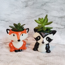 Animal Planters with Succulents, Fox and Raccoon, 3 inches, ceramic