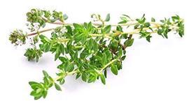 Sow No GMO Thyme Thymus Vulgaris - French or Summer Thyme Non GMO Heirlo... - $4.92