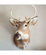 Vintage Shoulder Mount 7 Point Whitetail Deer Real Antler Taxidermy Tagg... - $242.52