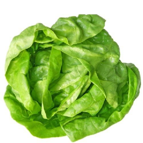 SHIPPED From US,PREMIUM SEED: 140 Particles of Butterhead Lettuce, Hand-Packaged