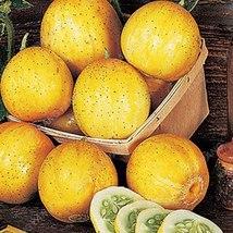 50Pcs Rare Purple Cucumber Delicious Vegetables (7), HZ Healthy Vegetabl... - $8.89