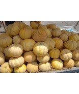SHIP From US, 10 Seeds GIANT! Sweet Juicy Cantaloupes, DIY Healthy Veget... - $18.99