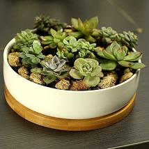Succulent Planter White Ceramic Decorative Garden pots Planters with Bam... - $22.32 CAD