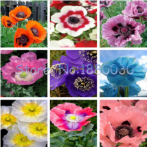 100 SEED Beautiful 9 different colors of oriental poppy seeds potted bon... - $4.20