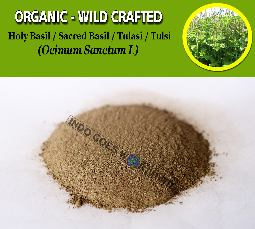 POWDER Holy Basil Sacred Basil Tulasi Tulsi Ocimum Sanctum Organic Wild Crafted