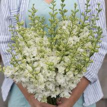 White Larkspur Seed  / Larkspur Flower Seeds - $17.00