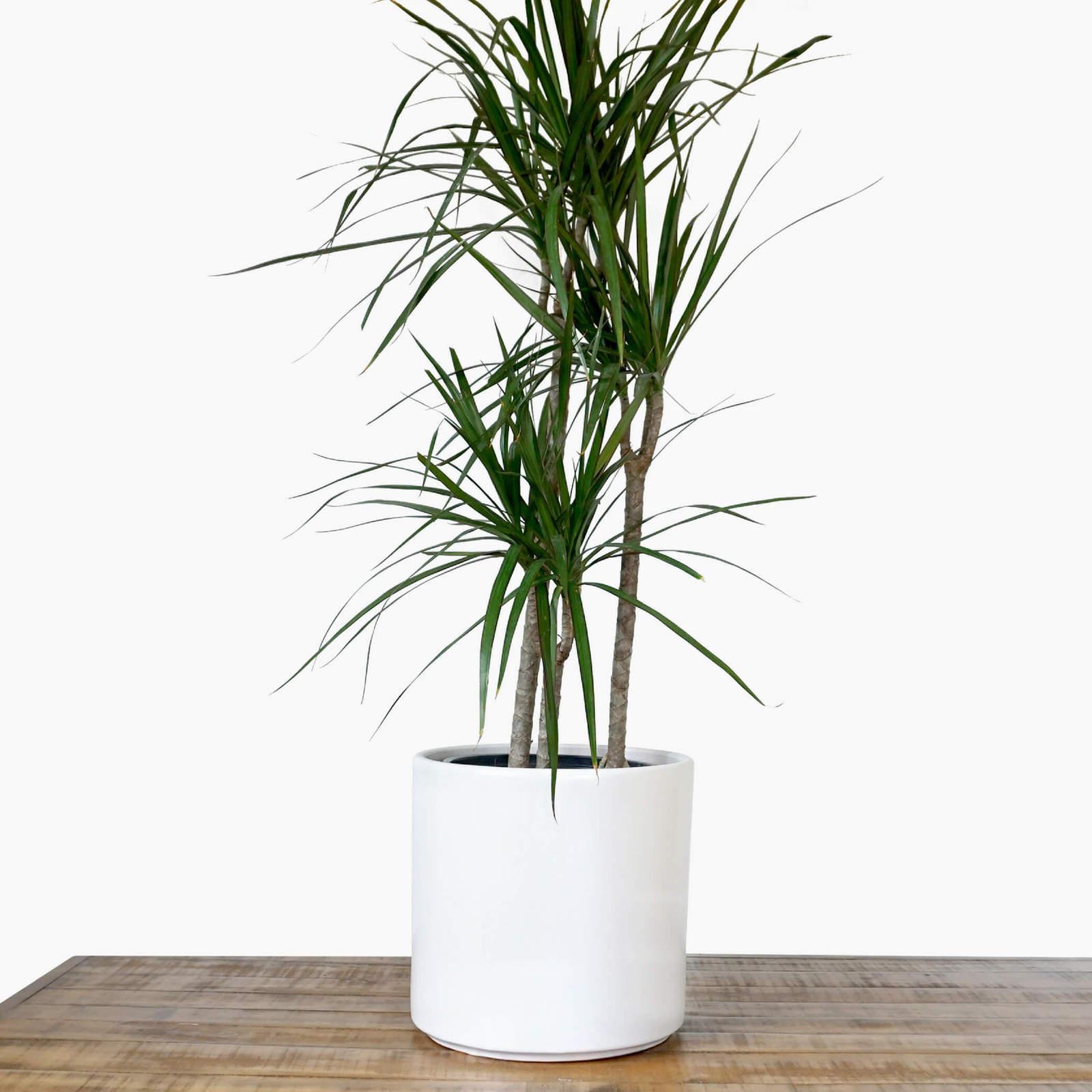 Large White Plant Pot Modern Planter Ceramic Indoor