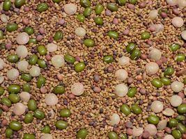 SHIP From US, 96K Seeds 1 lb Mix Salad Sprouting Microgreens, DIY  ZJ01 - $100.41