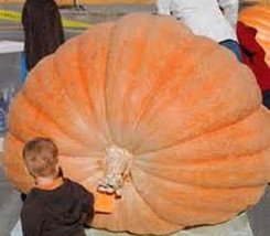 7 Prize Winner Pumpkin Seeds-1169 - $3.98