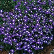 From Us 200 Mrs Clibran Lobelia Erinus Flower Seeds Sbr - $11.99