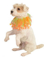 Dogs Orange and Green Fancy Collar  - $4.00