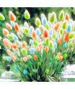 Egrow 100Pcs/Pack Rabbit Tail Grass Seeds Mixed Color Garden Bunny Tail ... - $5.92