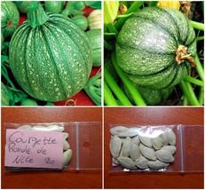 Round Courgette ''Ronde De Nice'' ~20 Top Quality Seeds - Early Variety - $16.38