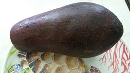 live aguacate  fruit 5'' to 8'' avocado tree - Yard, Garden & Outdoor Living - $62.00