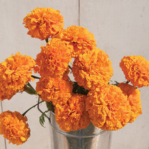 Giant Orange Marigold Seeds / Marigold Flower Seeds - $21.00