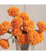 Giant Orange Marigold Seeds / Marigold Flower Seeds - $21.00
