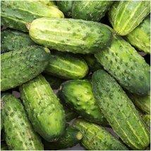 Package of 90 Seeds, Wisconsin SMR-58 Pickling Cucumber (Cucumis sativus) - $3.50