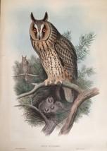 Antique Lithograph - OTUS VULGARIS, John Gould'... - $749.99