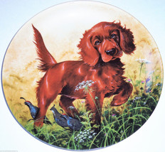 Irish Setter Collector Plate 1988 Missing the Point United Kennel Club COA  - $59.95