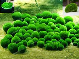 Mixed Water Grass Seeds Aquarium Fish Tank Grass Aquarium Water Grass 200pcs - $6.55