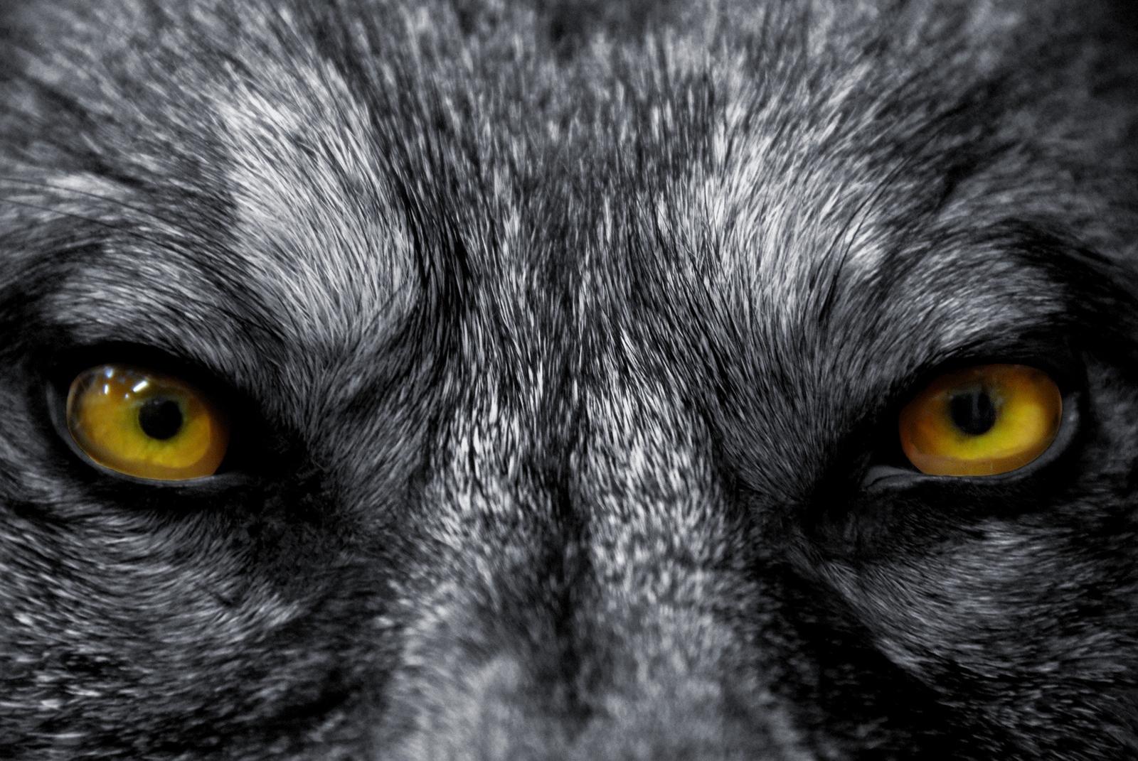 Haunted - Adlet Werewolf – Dark Beast of the Inuit Legend