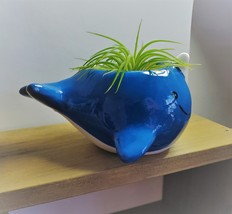 """Live Air Plant in Whale Animal Planter, 5"""" blue glazed ceramic pot, Narwhale image 2"""