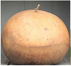 Giant African Bushel Basket Gourd Lagenaria Siceraria Seeds 10 Seeds / Pack - $4.12