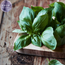 Italian Large Leaf Basil Seeds, 20 Seeds, Culinary Herb Seeds - $4.12