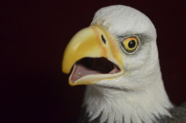 "Large Bald Eagle 14"" mouth open pc Art, Hand Sculptured, Crafted,Hand Pa... - $55.44"
