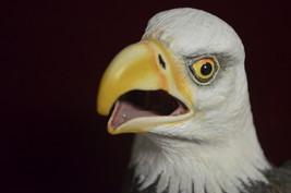 "Large Bald Eagle 14"" mouth open pc Art, Hand Sc... - $55.44"