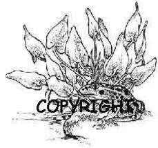Lillypond Frog New Release Mounted Rubber Stamp - $8.00