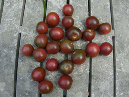 Tomato - Black Cherry - Non-Hybrid - Non-GMO - St Clare Heirloom Seeds - $2.99